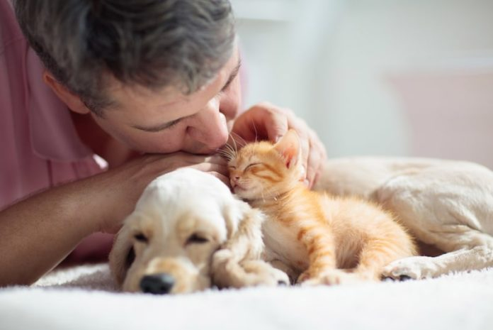 fostering cats and dogs man petting kitten and puppy