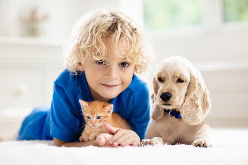 little boy with kitten and puppy on floor daylight