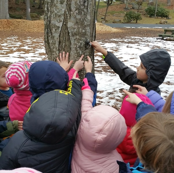 maple sugar festival stamford ct children around a tree