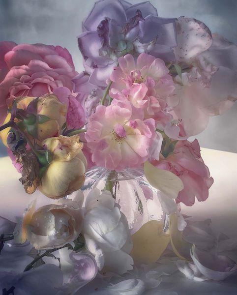 Nick Knight roses garden painting