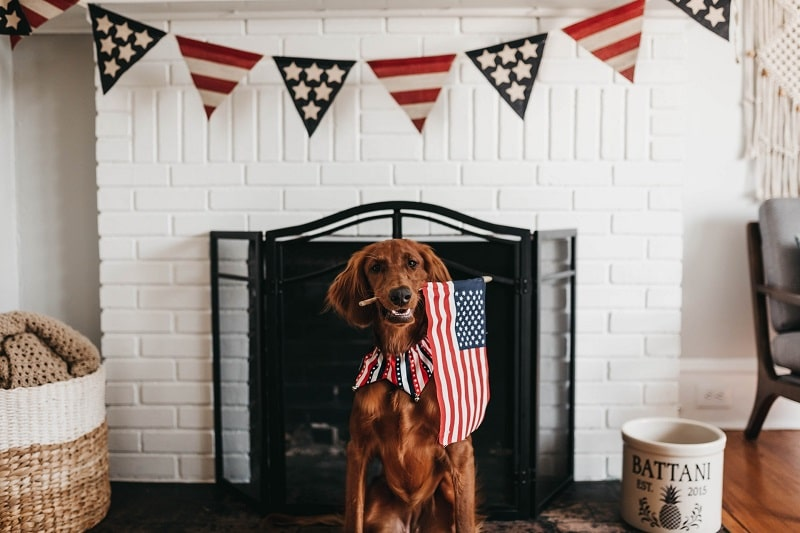 dog at home fourth of july weekend american flag