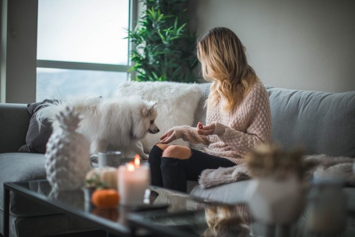 young woman on sofa interacting with small dog