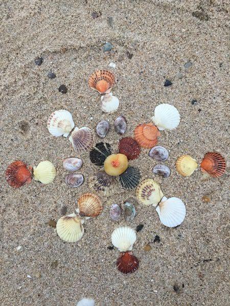 sand artwork seashells