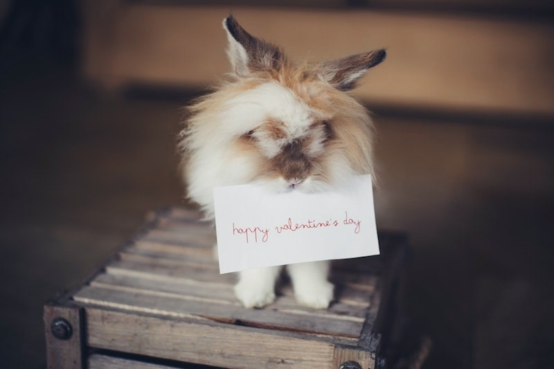cute furry bunny holding happy valentine's day note