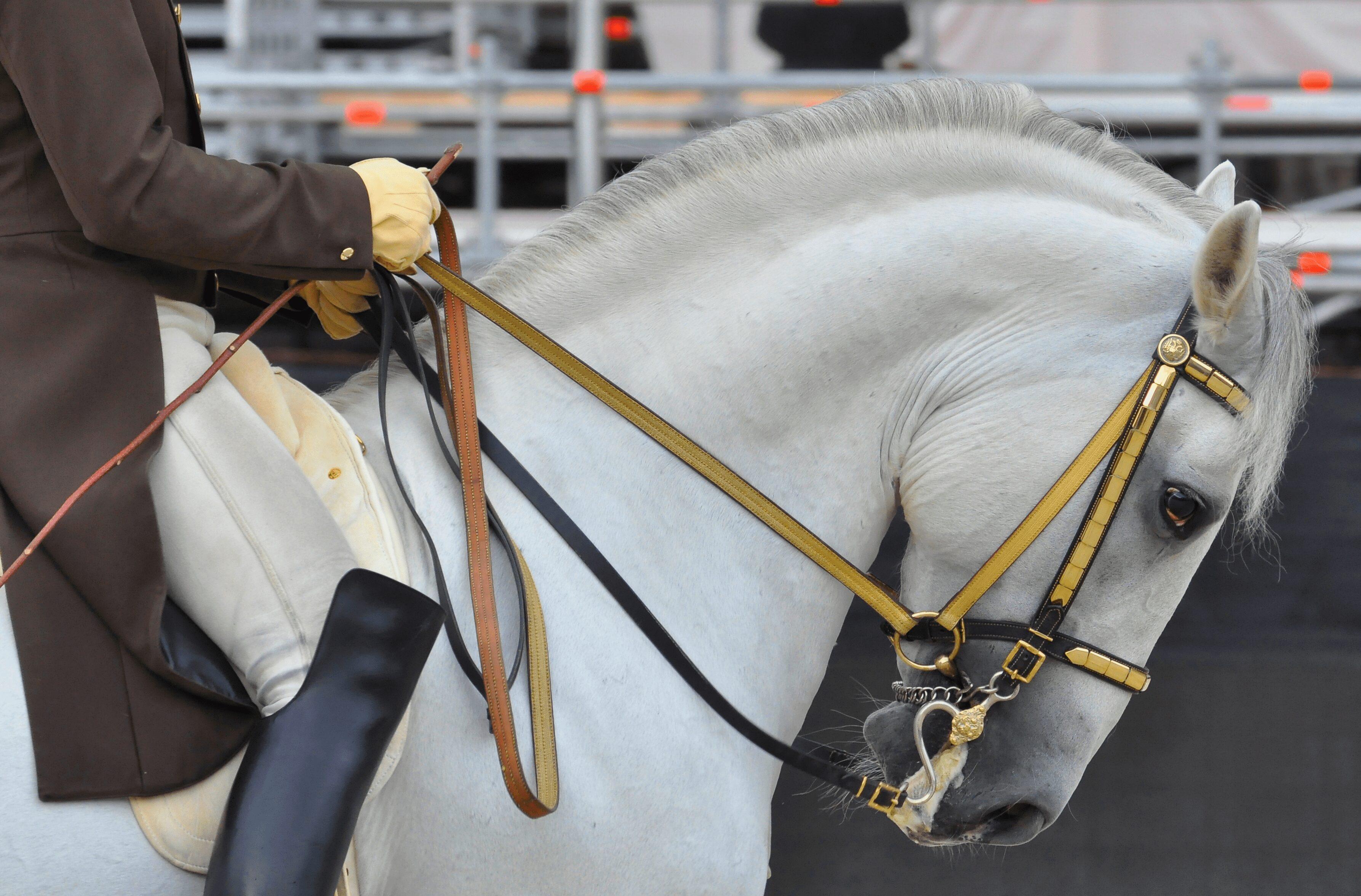 Spanish Riding School Horse Vienna - East End Taste Magazine
