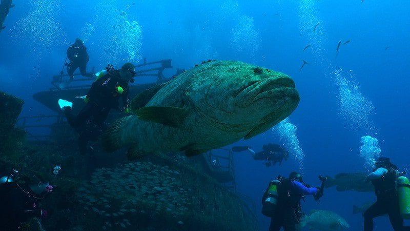 treasure coast wreck diving grouper florida