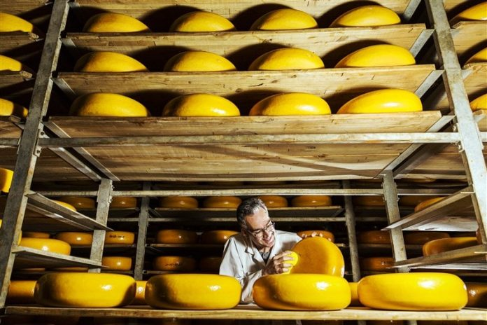 Cleaning Cheese in Woerden - East End Taste Magazine