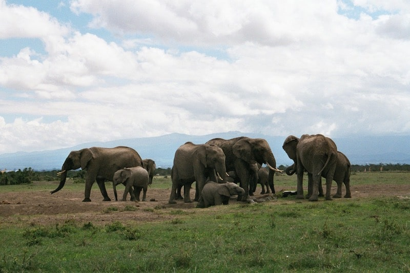 elephant group large eastern africa dreamy safari camps
