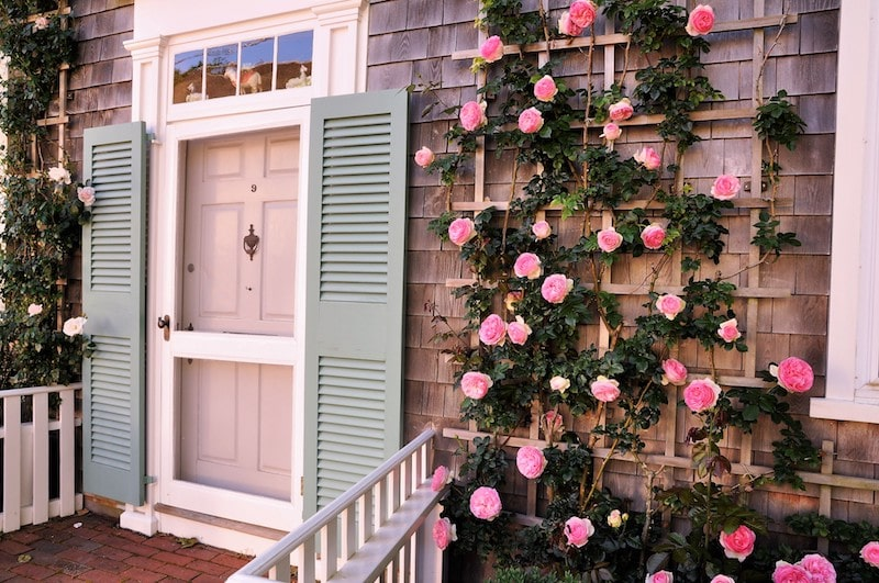 nantucket home with climbing roses - East End Taste Magazine
