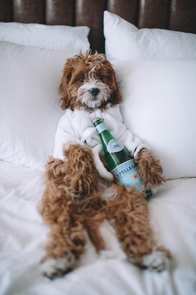 The Gabriel Miami puppy stay hotel package