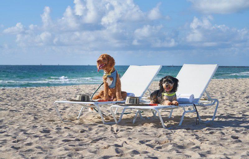 ocean sandy paws dogs on the beach