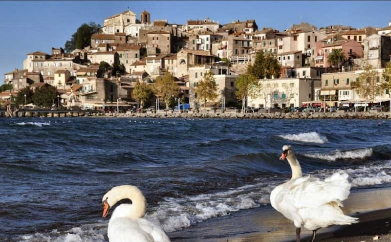 Lake Bracciano in italy day trip with swans