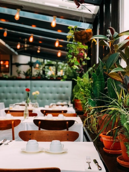 restaurant interior with plants and roses on table