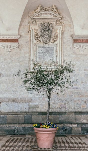 detail of tree and flowers in a red pot under covered walkway at Church of Santa Maria spoleto italy